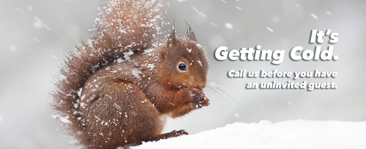 its getting cold. call before you have an uninvited guest.