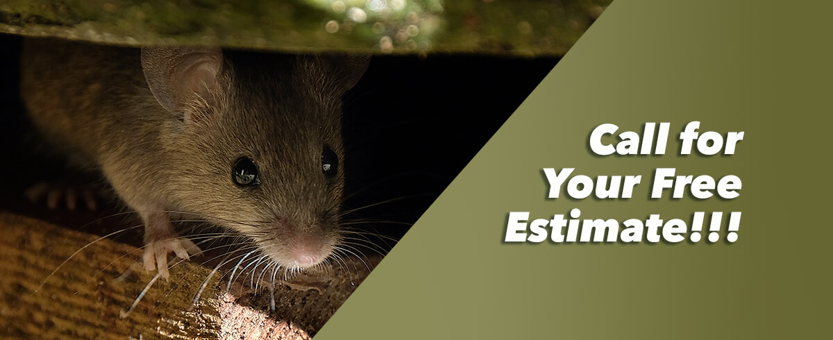 A small brown mouse peers out from under a blanket with the text 'Call for your free estimate'
